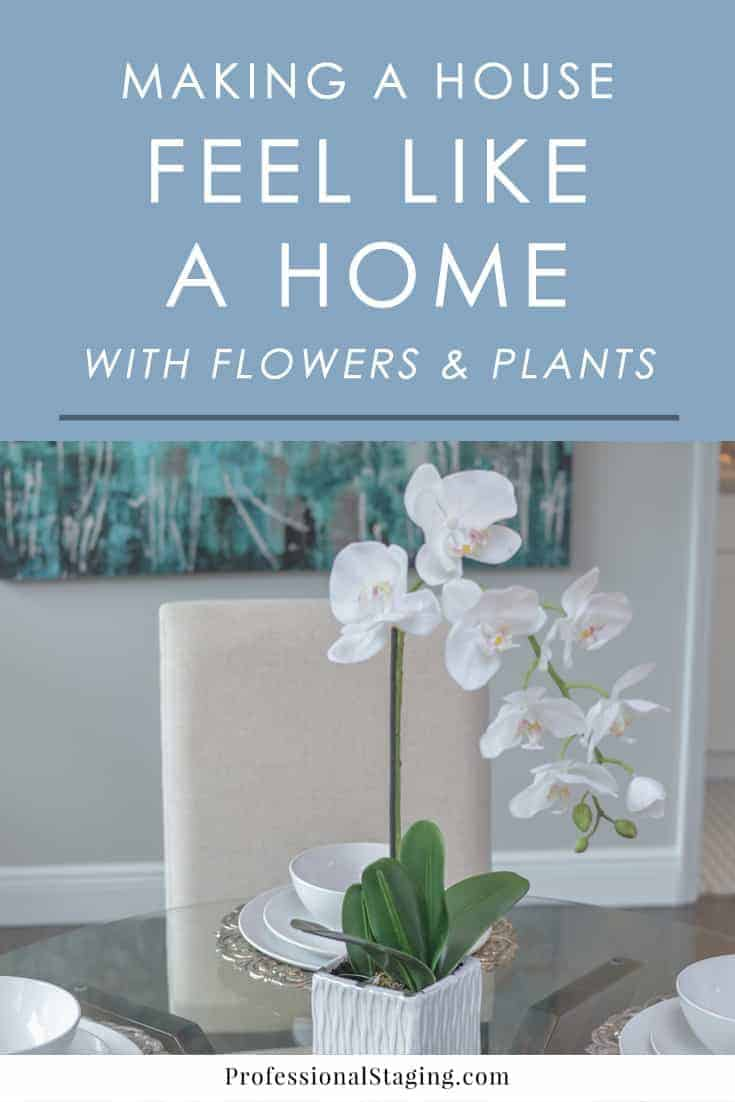 making a house feel like a home with plants